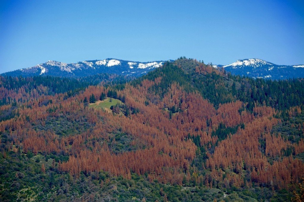 Trump administration expected to cut jobs in Forest Service restructure