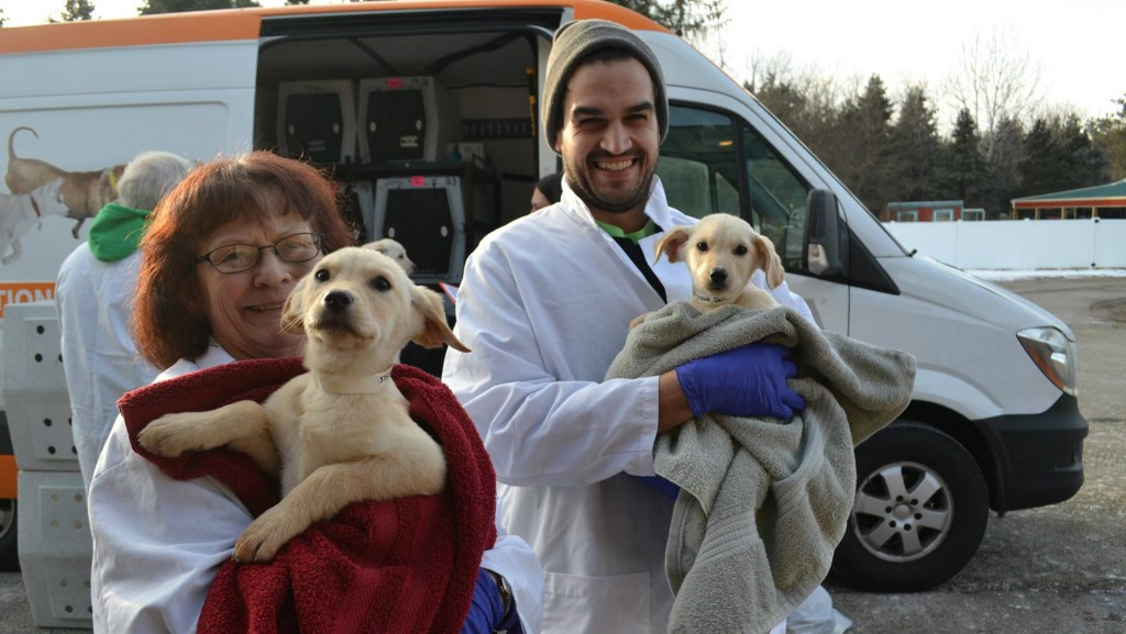 PHOTOS: Dane County Humane Society receives 22 puppies, 3 dogs from Mississippi