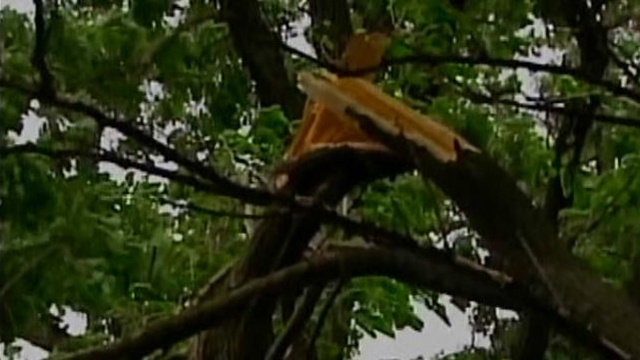 Strong winds down trees, power lines in southern Wisconsin
