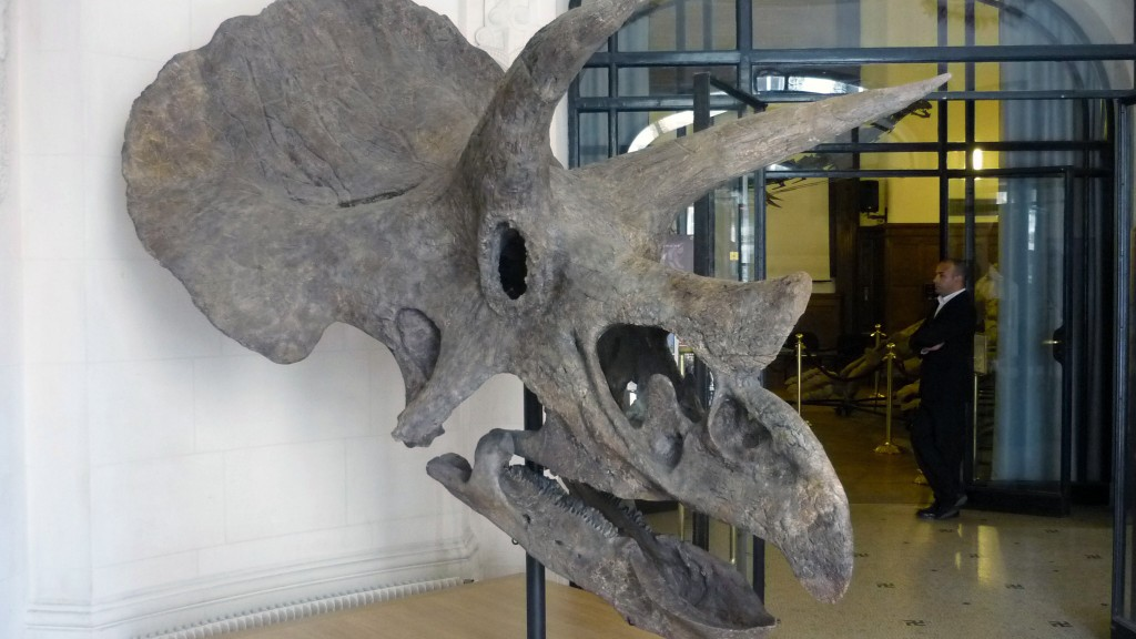 Scientists identify 68-million-year-old triceratops fossil in Colorado