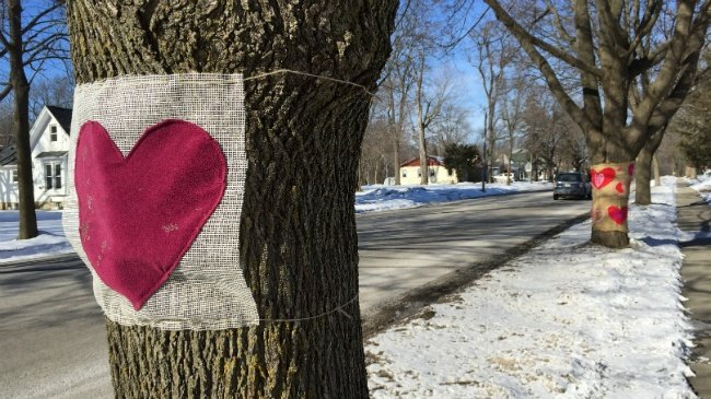 Lake Mills residents show love for trees slated for removal
