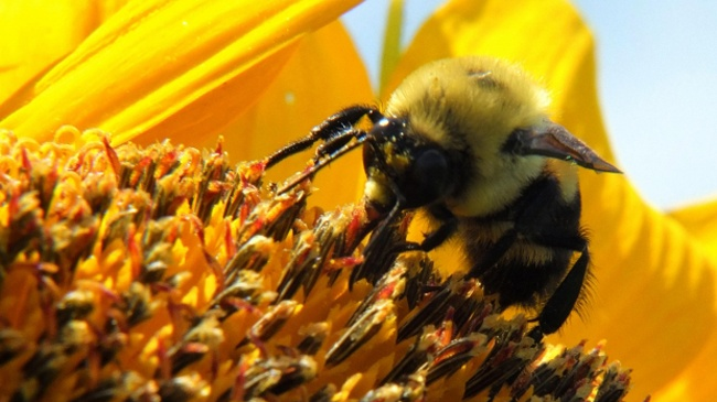 App monitors hives to keep bees alive through winter