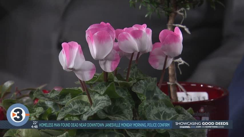 Lisa Briggs gives alternative suggestions to holiday flowers