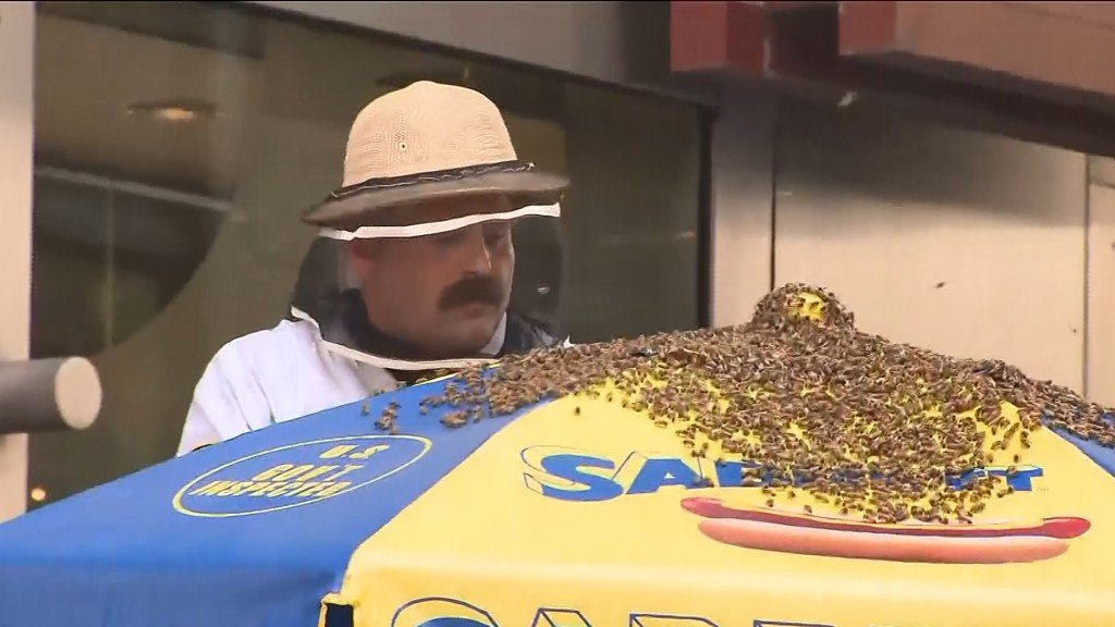 Thousands of bees swarmed Times Square hot dog stand