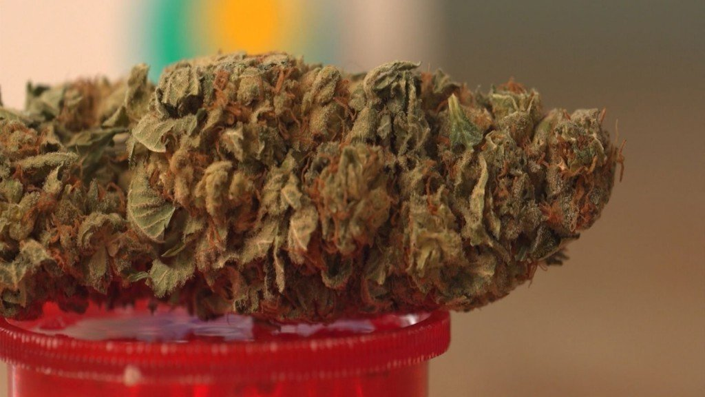Cannabis users needed up to twice the sedation for medical procedures, small study says