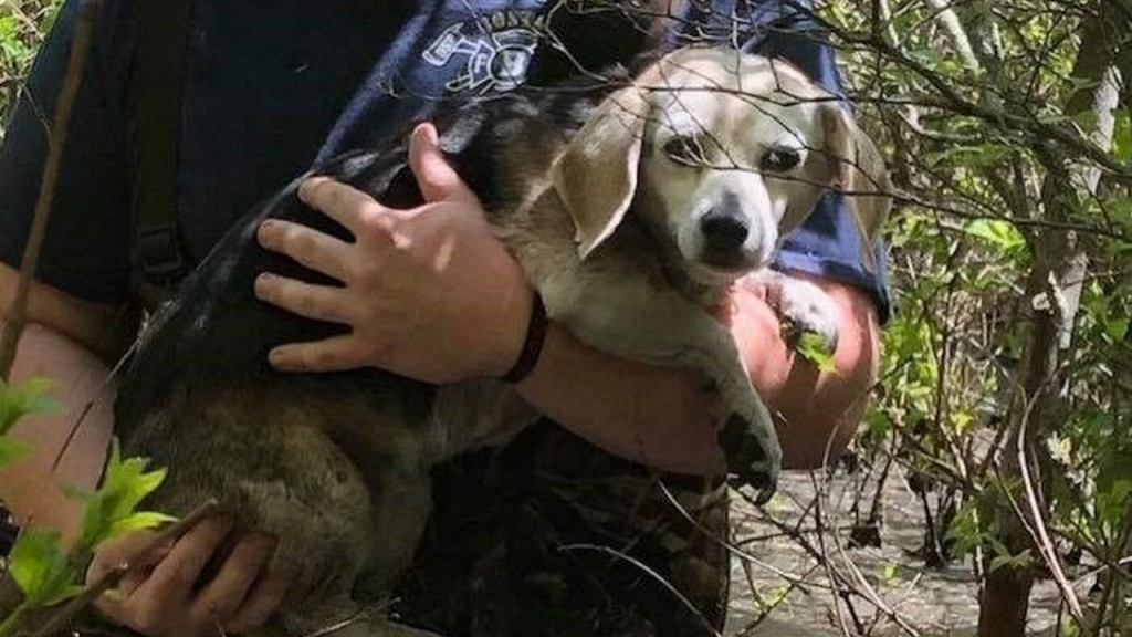 Firefighters rescue puppy from swamp