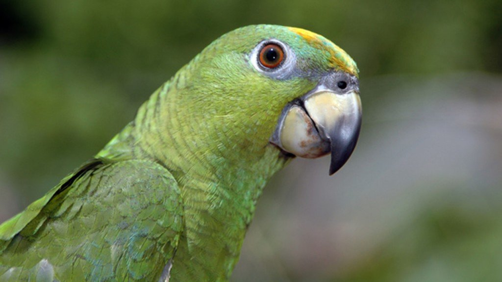 Man rescued from tree after chasing pet parrot