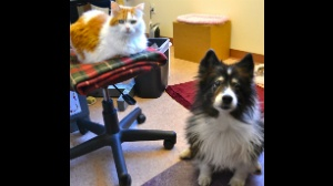 DCHS: Unlikely cat-dog-duo adopted together