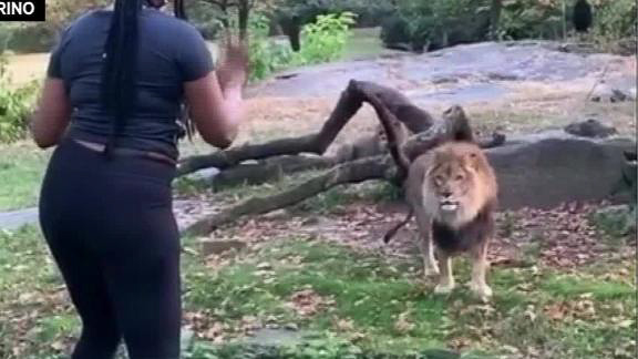 Police ID woman who taunted lion at Bronx Zoo