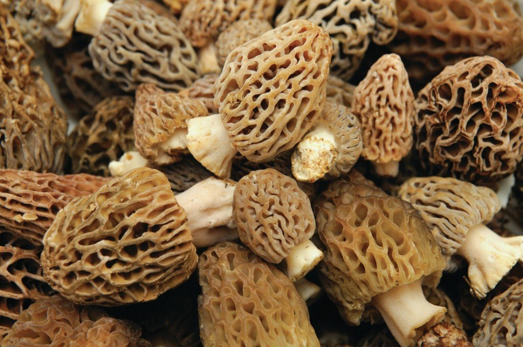Celebrating morel mushrooms with a festival and a recipe