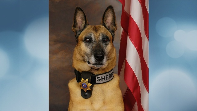 Sheriff's office to hold memorial service Friday for K-9 Diego