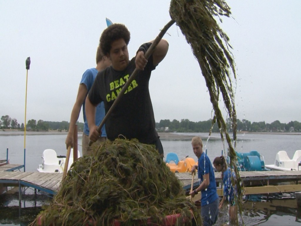 Weed harvesters work to clear heavy growth in Dane County lakes