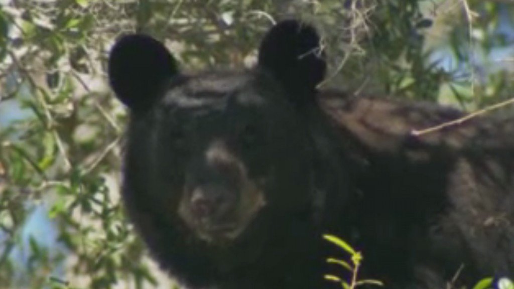 'Bear in driveway': UPS delivery hits snag