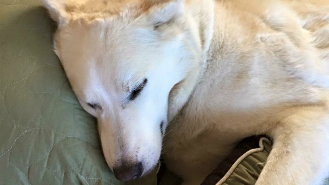 Bitter cold weather brings danger for pets