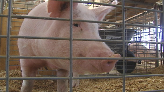 """Passion for Pork"" a new program to serve food banks."