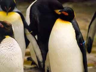 Racine Zoo welcomes 4 African penguins to existing colony