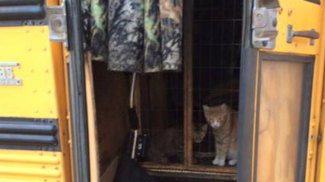 Officer helps man, cats in temporarily stranded bus