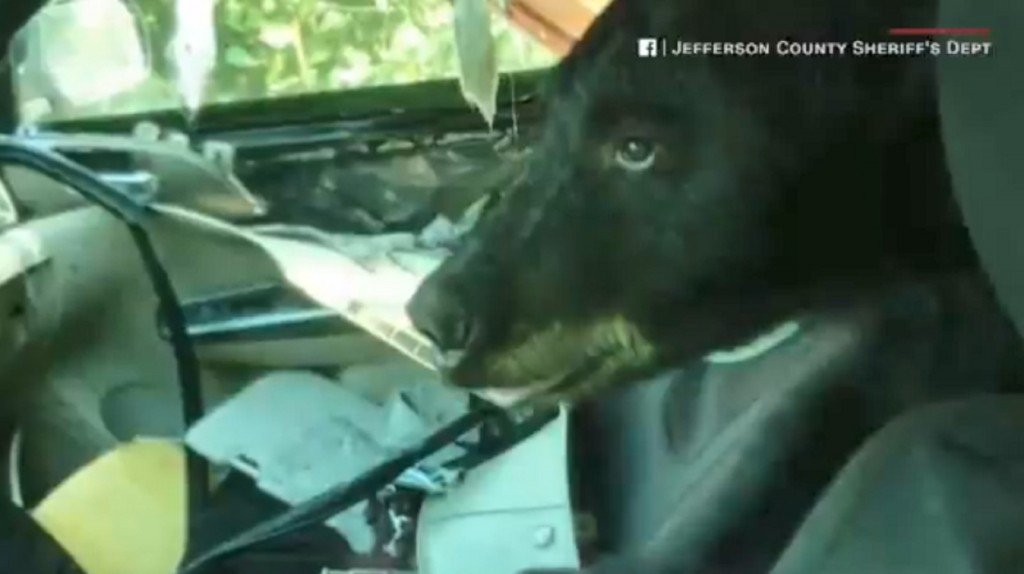 Trapped bear rips car's interior to shreds