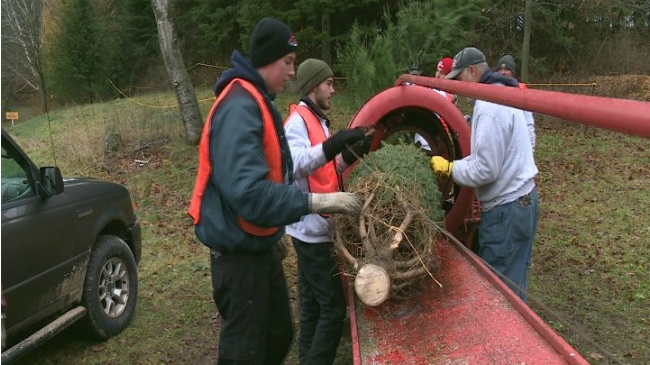 Generations come together over Christmas tree shopping on Black Friday