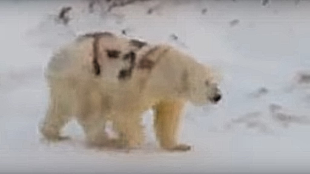 Experts fear polar bear spray-painted with graffiti won't survive