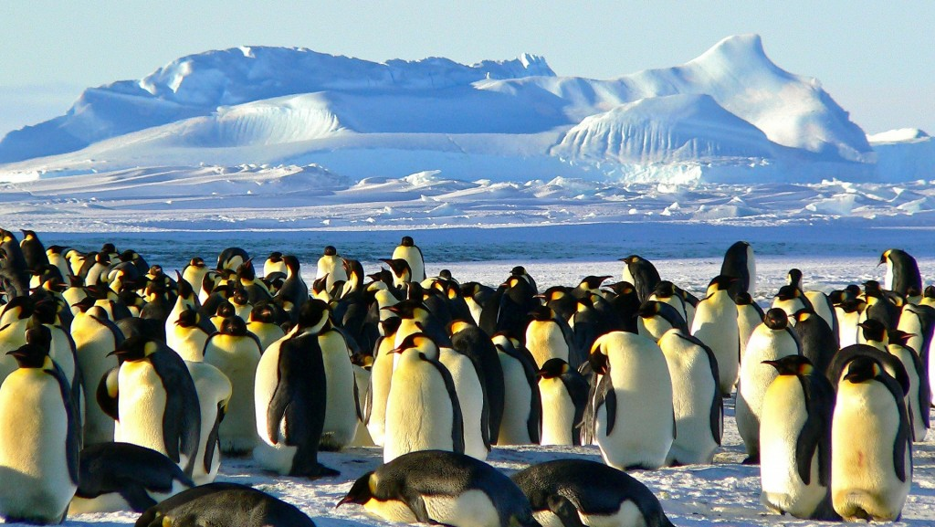 World's second-largest emperor penguin colony has nearly disappeared