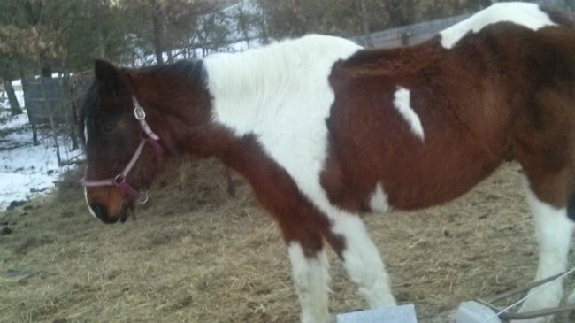 Oxford family: Therapy horse shot, killed
