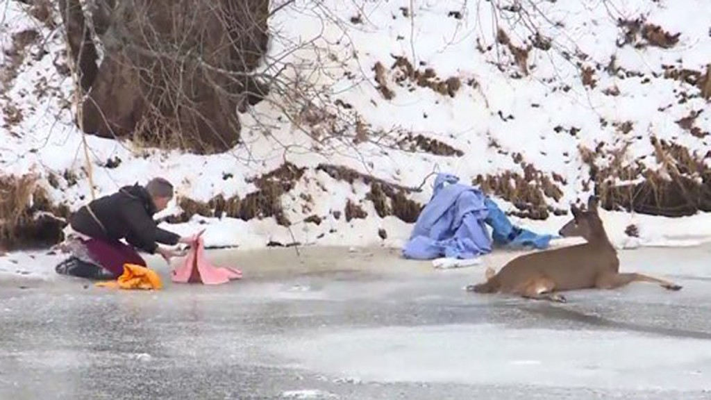 Police rescue deer from frozen river