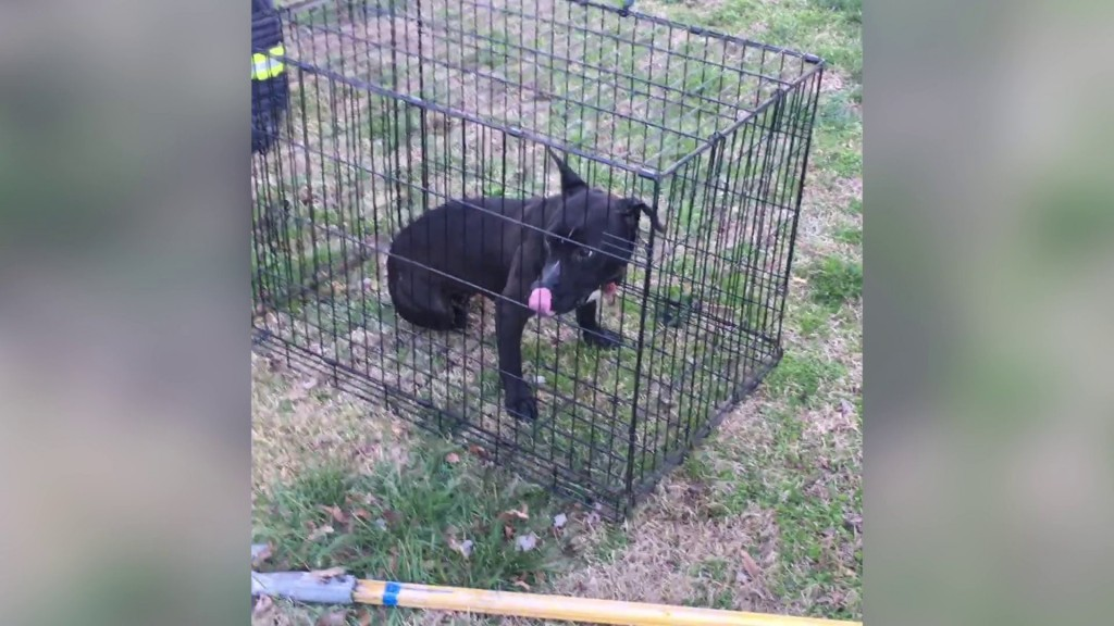 Firefighters revive dog found in burning home