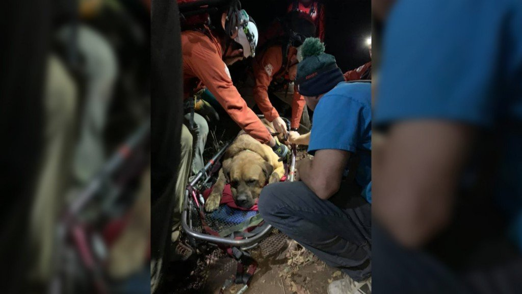 Massive mastiff rescued after getting exhausted on mountain hike