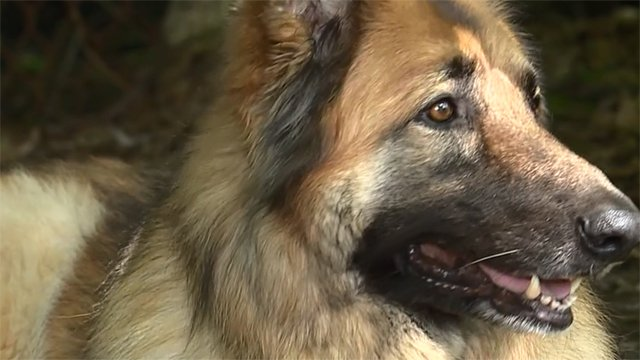 Why do dogs save lives? Here's the science behind it