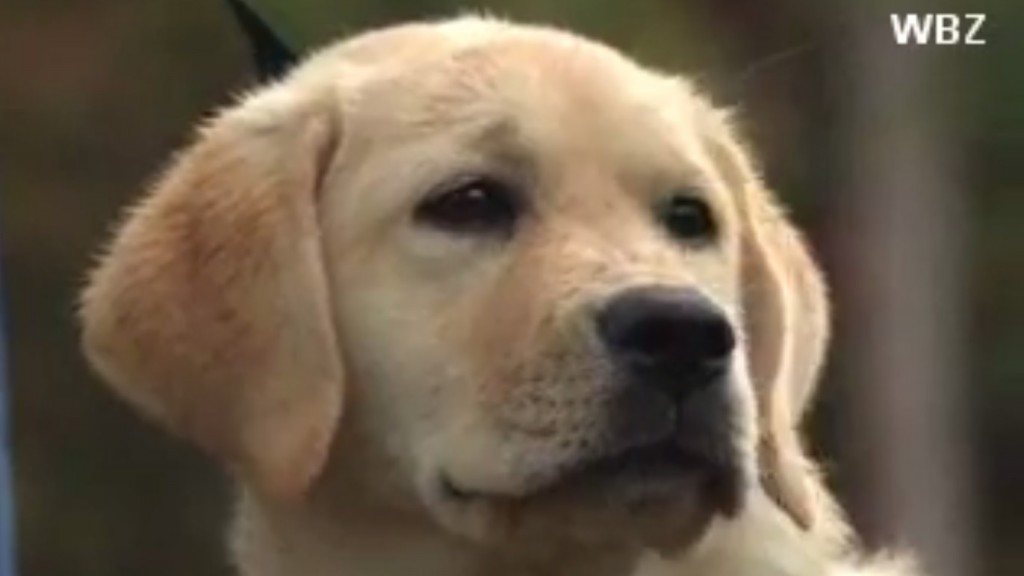 Puppy revived after accidental overdose
