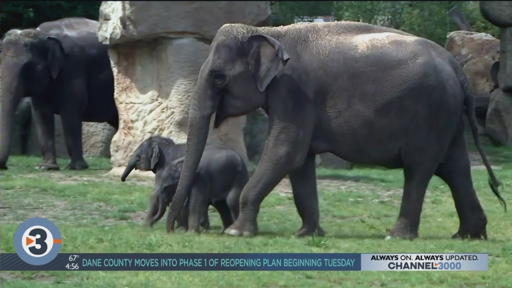 Newshounds Now Update: Baby Elephants And Extreme Couch Surfing