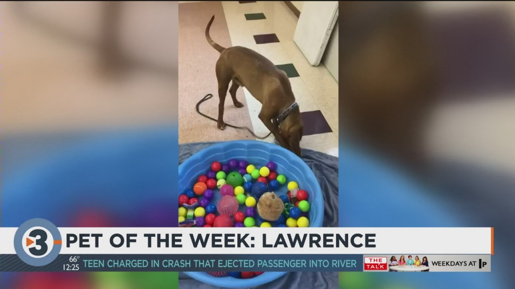 Meet The Pet Of The Week: Lawrence
