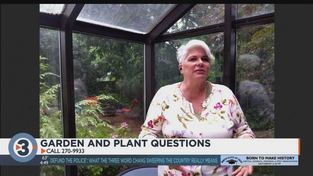 Lisa Answers Questions From Viewers About Plants, Gardening
