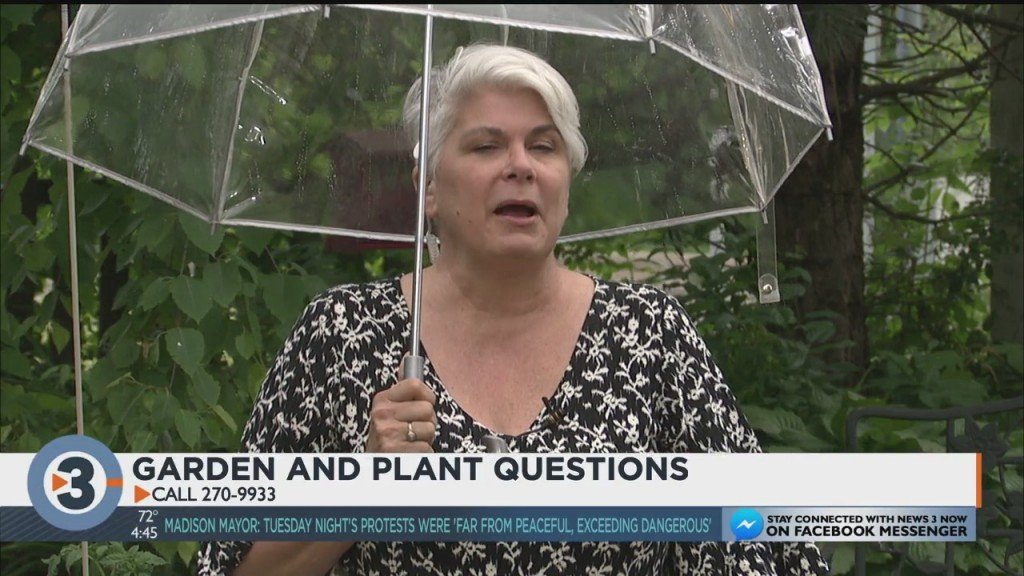 Lisa Answers Viewers Gardening Questions, Including Inquiries About Rhubarb