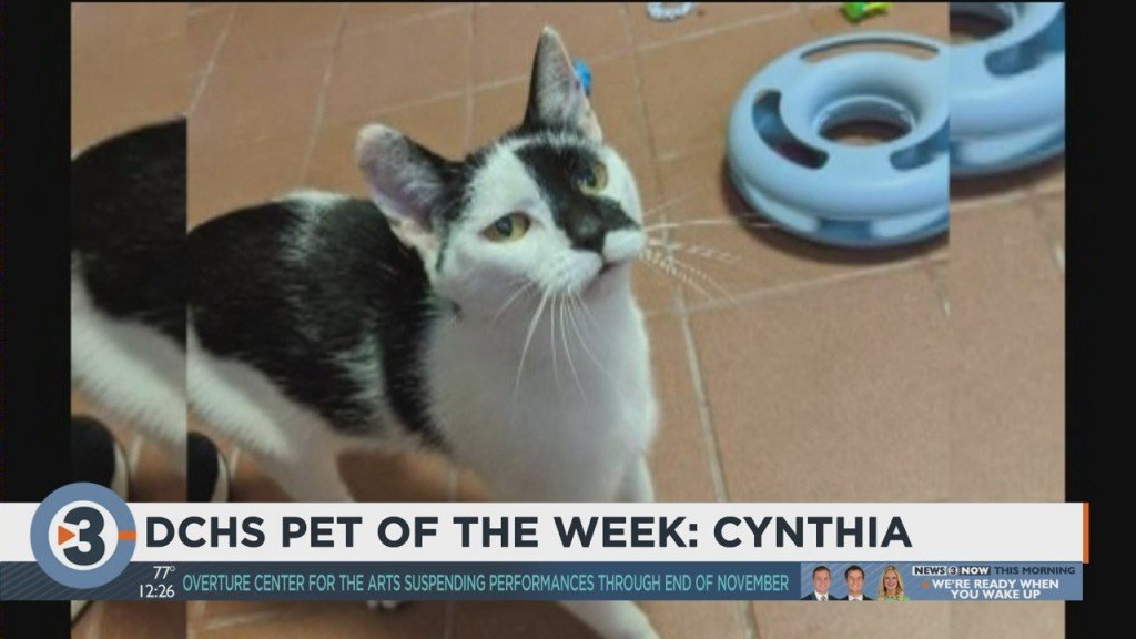 Meet The Pet Of The Week: Cynthia