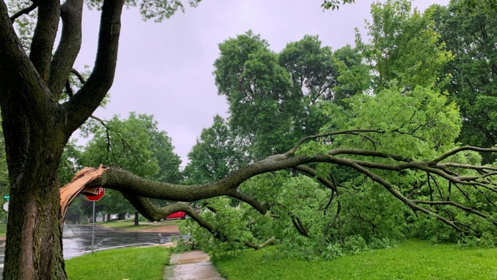 A Tree Damaged By Severe Weather