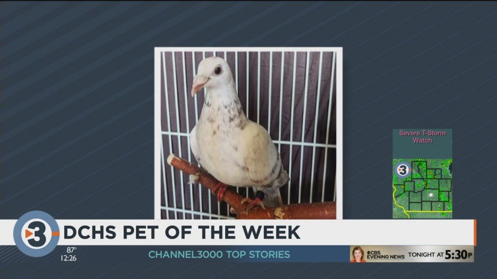 Meet The Pet Of The Week: Pige