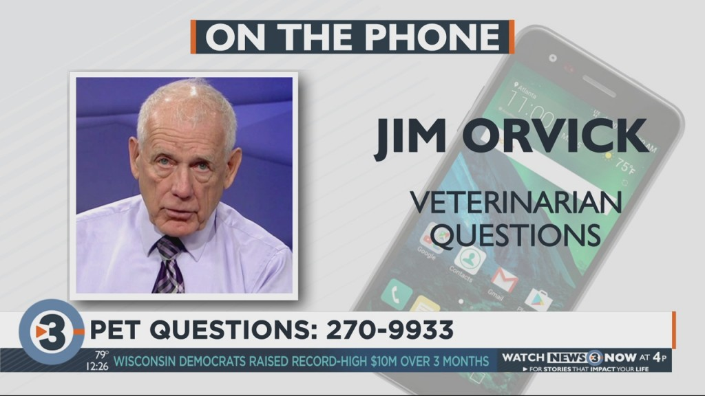 Dr. Orvick Answers Your Pet Questions