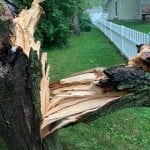 A Tree Split By A Strong Storm In Sauk City