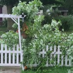 Damaged Branches On A Fence in Sauk City