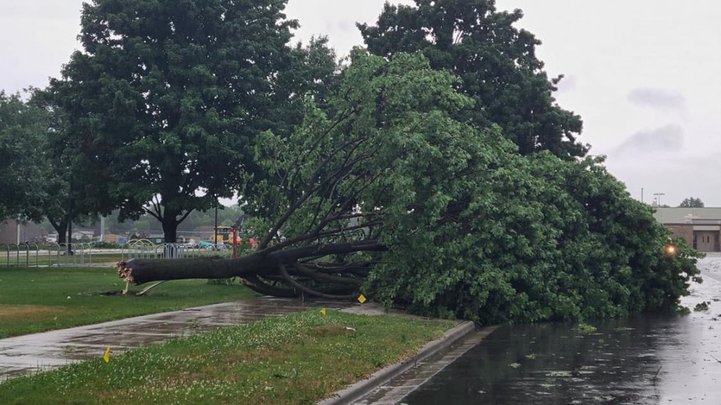 A downed tree in Sauk City