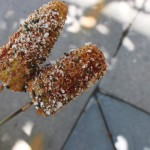 two Elotes on a stick