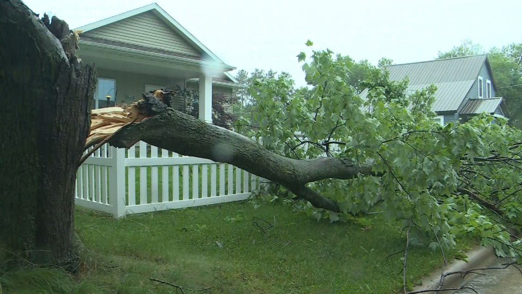 Sauk Prairie Tree Down