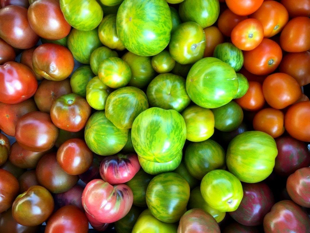 Thumbnail Tomatoes Rainbow Outdoor