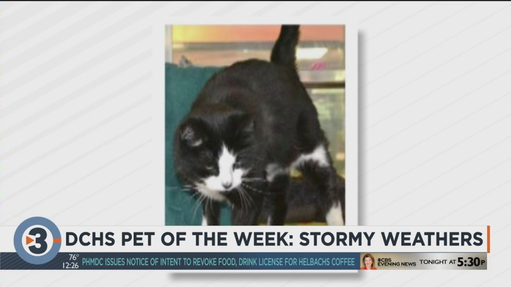 Meet The Pet Of The Week: Stormy Weathers