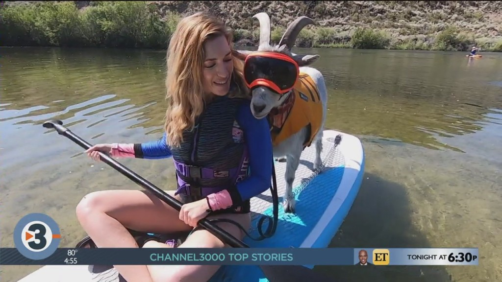 Newshounds Now Update: A Thirsty Kitty, A Soaking Bear And A Paddle Boarding Goat