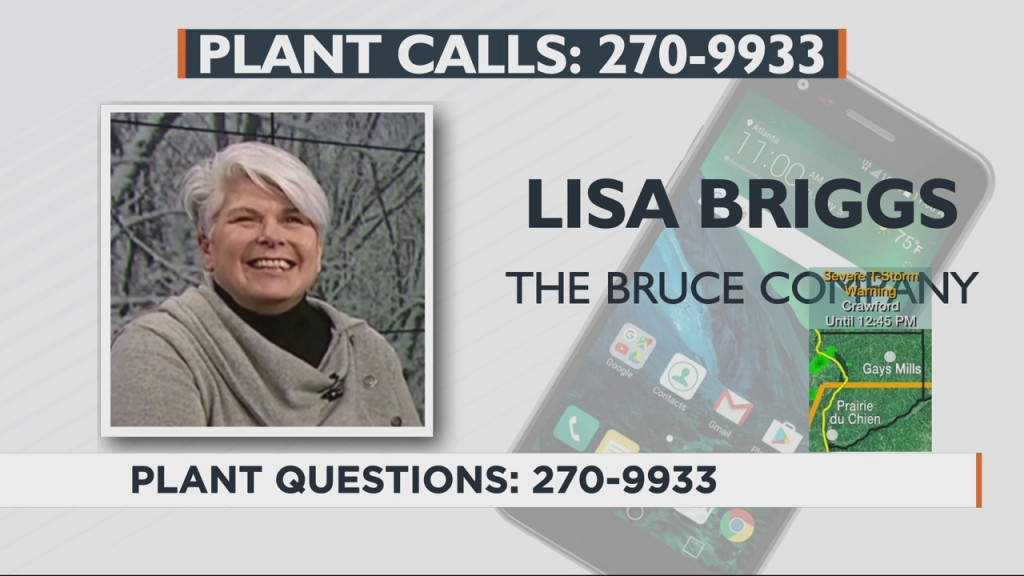 Lisa Answers Viewers' Plant, Gardening Questions