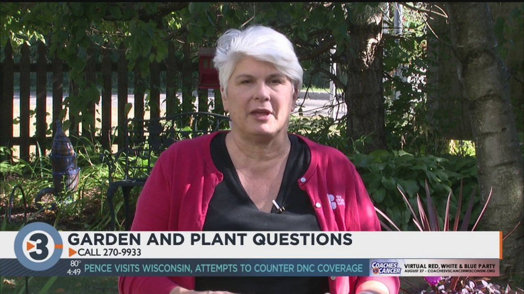 Lisa Answers Viewers' Questions On Gardening, Plants