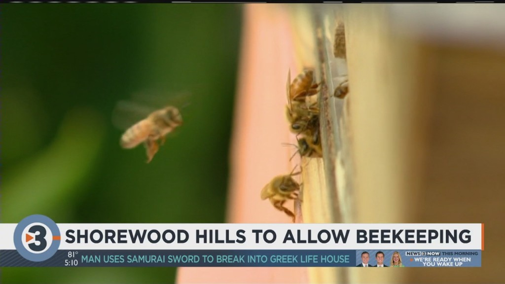 Shorewood Hills To Allow Beekeeping